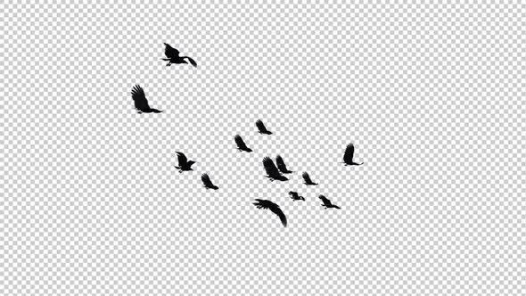 Raven Flock - 13 Birds - Flying Loop
