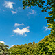 Sky and Clouds Framed by Trees - VideoHive Item for Sale