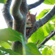 Squirrel Sits On Tree Branch 3 - VideoHive Item for Sale
