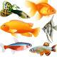 Aquarium Fish - GraphicRiver Item for Sale