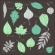 Vector Set of Leaves - GraphicRiver Item for Sale