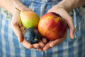 Organic Fruit - PhotoDune Item for Sale