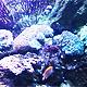 Aquarium World - VideoHive Item for Sale