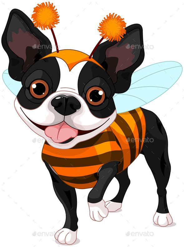 Halloween Boston Terrier