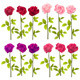 Realistic Roses - GraphicRiver Item for Sale