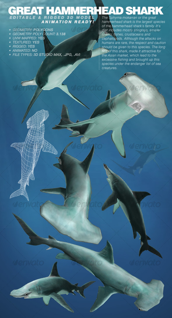 Poly 3D Animal Models from 3DOcean