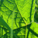 Grass And Green Leaves With Sunlight - VideoHive Item for Sale