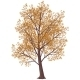 Autumn Tree - GraphicRiver Item for Sale