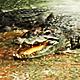 Crocodiles Life - VideoHive Item for Sale