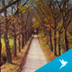 Flying Low Over the Forrest Road - VideoHive Item for Sale
