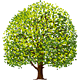 Tree Drawing - GraphicRiver Item for Sale