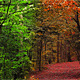Forest Walkway - VideoHive Item for Sale
