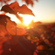 Autumn Leaves on a Tree - VideoHive Item for Sale