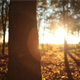 Forest in the Autumn 2 - VideoHive Item for Sale