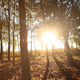 Forest in Autumn 2 - VideoHive Item for Sale