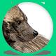 Hyena - GIF Animation Controls - CodeCanyon Item for Sale