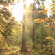 Autumn in the Forest - VideoHive Item for Sale