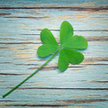One lucky clover on a blue vintage wood background - PhotoDune Item for Sale