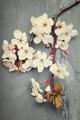 Cherry blossom flowers on a dark tile slate background - PhotoDune Item for Sale