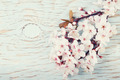 Beautiful spring cherry blossom flowers on a light blue wooden b - PhotoDune Item for Sale
