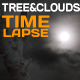 Tree & Clouds - VideoHive Item for Sale