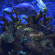Blue Water Scenery With Exotic Fishes - VideoHive Item for Sale