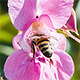 Bee on Blossom of a Flower - VideoHive Item for Sale