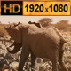 Elephant and a Group of Zebra at Waterhole - VideoHive Item for Sale