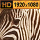 Zebra and Antelope Group at Waterhole - VideoHive Item for Sale