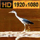 Bird in the Water - VideoHive Item for Sale