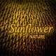 Abstract Nature Backgrounds with Sunflower Seeds - GraphicRiver Item for Sale