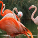 Flamingos At Waterfront - VideoHive Item for Sale