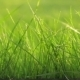 Grass With Water Drops - VideoHive Item for Sale