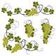 Grape Vines - GraphicRiver Item for Sale