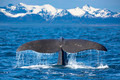 Whale tail - PhotoDune Item for Sale