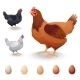 Realistic Hens In Different Breeds And Eggs - GraphicRiver Item for Sale
