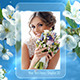 Photo Gallery Spring Blossoms - VideoHive Item for Sale