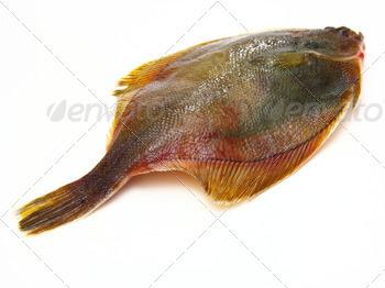 Fresh fishes flounder  on white background
