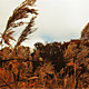 High Autumn Grass - VideoHive Item for Sale