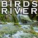 Nature Ambience River & Chirping Birds Loop