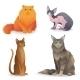 Cat Breeds Set - GraphicRiver Item for Sale