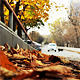 Autumn in the City and Dogs - VideoHive Item for Sale