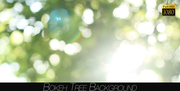 Bokeh Tree Background 22