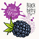 Blackberry - GraphicRiver Item for Sale
