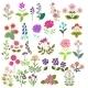 Flowers Set - GraphicRiver Item for Sale