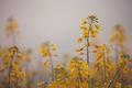 Yellow Flowers - PhotoDune Item for Sale
