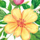 Floral Toolkit Oil Pastels - GraphicRiver Item for Sale