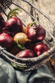 Red Onions - PhotoDune Item for Sale