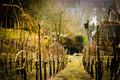 Birdbox in the Winter Vines - PhotoDune Item for Sale