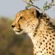 Safari - AudioJungle Item for Sale